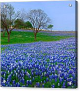 Bluebonnet Vista - Texas Bluebonnet Wildflowers Landscape Flowers  Acrylic Print