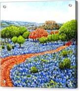 Bluebonnets Across Texas Acrylic Print