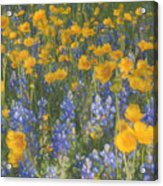 Bluebonnets And Wildflowers Acrylic Print