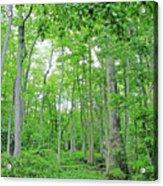 Blueboonet Swamp Baton Rouge La Acrylic Print