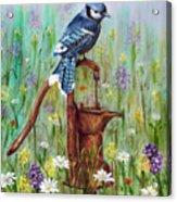 Bluejay Peaceful Perch Acrylic Print