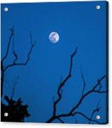 Bluemoon Acrylic Print