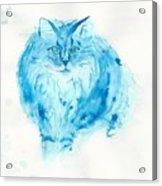 Blues Cat Acrylic Print