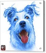 Blueterrier Mix 2989 - Wb Acrylic Print