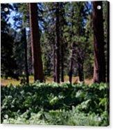 Bluff Lake Ca Fern Forest 4 Acrylic Print