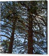 Bluff Lake Ca Through The Trees 3 Acrylic Print