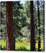 Bluff Lake Ca Through The Trees 7 Acrylic Print