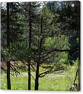 Bluff Lake Ca Through The Trees 8 Acrylic Print