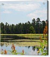 Bluff Lake Ca Wild Flowers 11 Acrylic Print