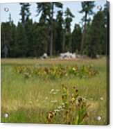 Bluff Lake Ca Wild Flowers 4 Acrylic Print