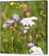 Bluff Lake Ca Wild Flowers 6 Acrylic Print