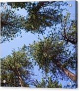 Bluff Lake Forest 2 Acrylic Print