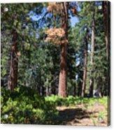 Bluff Lake Forest 6 Acrylic Print