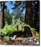 Bluff Lake Forest Foliage1 Acrylic Print