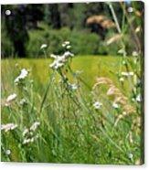 Bluff Lake Wild Flowers 1 Acrylic Print