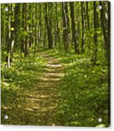 Bluff Trail Awenda Provincial Park Acrylic Print