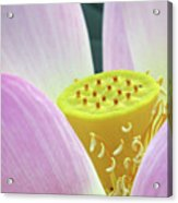 Blumen Des Wassers - Flowers Of The Water 06 Acrylic Print