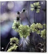 A Meadow's Blur Of Nature Acrylic Print