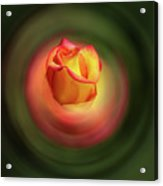 Bluring The Rose Acrylic Print