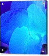 Blurple Flower Acrylic Print