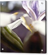 Blurred Iris Acrylic Print by Ray Laskowitz - Printscapes