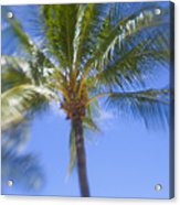 Blurry Palms Acrylic Print