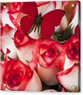Blush Roses With Red Butterfly Acrylic Print