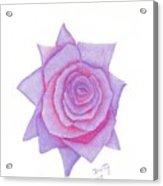 Blushing Blue Acrylic Print