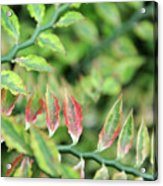 Blushing Leaves Acrylic Print