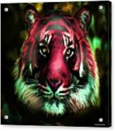 Blushing Tiger Acrylic Print