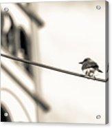 Bnw Bird - San Salvador I Acrylic Print