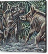 Boar Room Brawl Acrylic Print