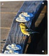 Boardwalk Inspector Acrylic Print