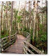 Boardwalk Through Corkscrew Swamp Acrylic Print