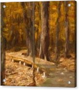 Boardwalk Through The Woods Acrylic Print