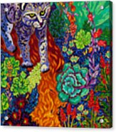 Bobcat Kachina  Acrylic Print
