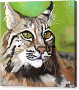 Bobcat Katta Acrylic Print