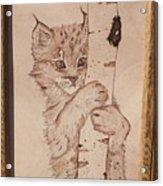 Bobcat Kitten Curiosity Acrylic Print