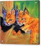 Bobcat Kittens 1 Acrylic Print