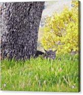 Bobcat Watch Acrylic Print