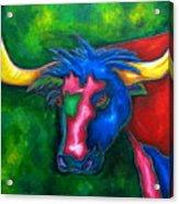 Boerne Longhorn Acrylic Print