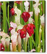 Bog In Bloom Acrylic Print