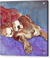 Bogs N Hugs Acrylic Print