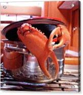 Boiled Crab Acrylic Print