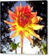 Bold And Beautiful Acrylic Print