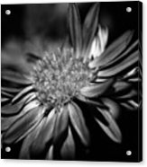 Bold Black And White Flower Acrylic Print