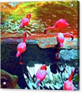 Bold Modified Flamingoes Acrylic Print