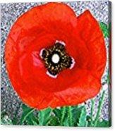 Bold Poppy Acrylic Print