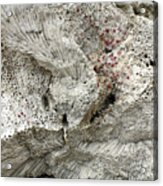 Bonaire Coral And Shells 1 Acrylic Print