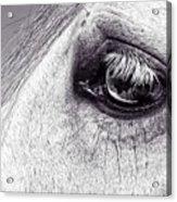 Bonbon's Eye Acrylic Print